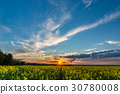 Photo of rapeseed field with sunset  30780008