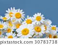 Daisy chamomile flowers frame on blue garden table 30783738