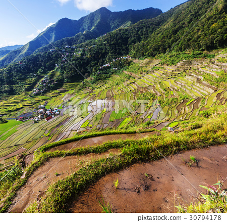 Rice terraces 30794178