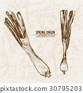 Digital vector detailed line art spring onion 30795203