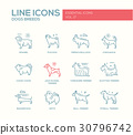 Dog breeds - line design icons set 30796742