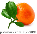 One tangerine or orange with leaves isolated on 30799091