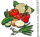 harvest of vegetables 30800787
