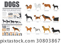 Dog info graphic template 30803867