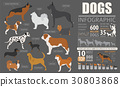 Dog info graphic template 30803868