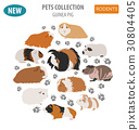 Guinea Pig breeds icon set flat style isolated  30804405