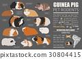 Guinea Pig breeds icon set flat style isolated  30804415