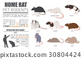 rat, icon, set 30804424