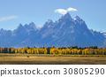 美國 森林 樹林 30805290
