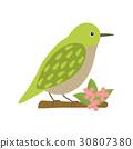 Uguisu bird animal cartoon character 30807380