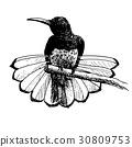bird hand drawn 30809753
