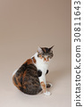 뒤돌아 고양이 30811643