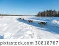 Dog sled in Alaska during winter 30818767