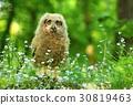 Baby horned owl in flowers 30819463