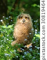 Young owl in flowers 30819464