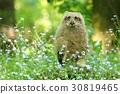 Cute horned owl in flowers 30819465