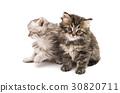猫 猫咪 动物 30820711