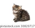 Little fluffy kitten isolated 30820717