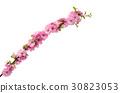 sakura flowers 30823053
