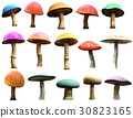 Mushrooms  30823165