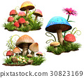 Mushrooms 30823169