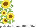 向日葵 矢量 花朵 30830967
