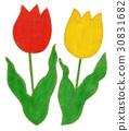 白底 花朵 花 30831682