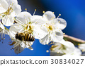 closeup honey flower 30834027
