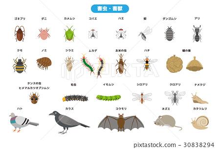 害虫 有害动物 矢量 30838294