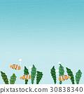 小丑魚 魚 背景材料 30838340