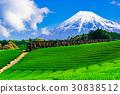 【靜岡縣】富士山和茶園 30838512