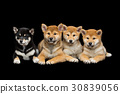 brown dog black 30839056