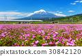 Shinkanzen with Mt. Fuji view 30842120