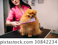 Pet groomer with comb, dog in grooming salon 30842234
