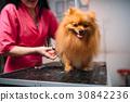 pet, dog, groomer 30842236