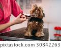 pet, dog, groomer 30842263