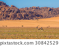 Oryx antelope in Namib-Naukluft national park 30842529