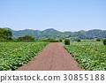 미우라의 호박 밭의 풍경 30855188