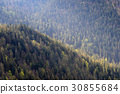 tree, green, forest 30855684
