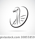 Vector of ostrich design on white background.  30855859