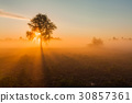 Beautiful foggy spring dawn on a field with trees 30857361
