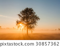 Beautiful foggy spring dawn on a field with trees 30857362