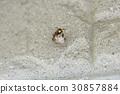 ผึ้ง,แมง,แมลง 30857884