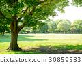 公園樹 30859583