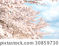 cherry blossom, cherry tree, cherry-blossom viewing 30859730