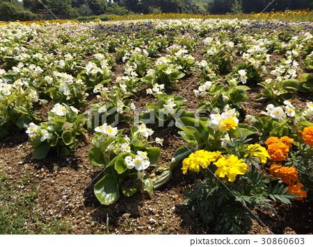 꽃, 플라워, 다년초 30860603