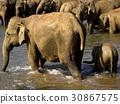Elephant bathing at the orphanage 30867575