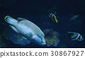 Beautiful exotic see fish in an aquarium 30867927