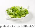 沙拉 色拉 芝麻菜 30868427