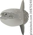 矢量 翻車魚 魚 30870240